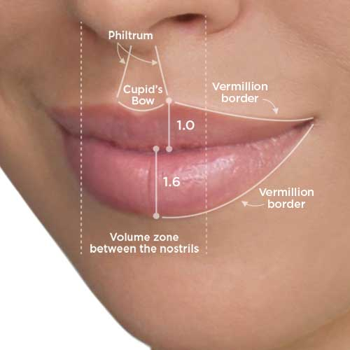 Lip Filler Structure Good Skin Days
